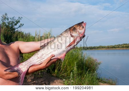 Large Fish Carver In The Hands Of Men