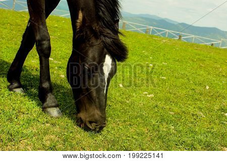 Horse close-up on the top of the mountain grazes in the summer