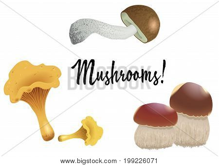 A set of different mushrooms isolated on white background. Orange cap boletus chanterelles and cep. Vector