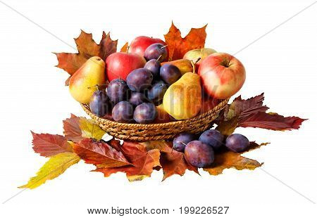 Basket with fruits and autumn leaves isolated on white background