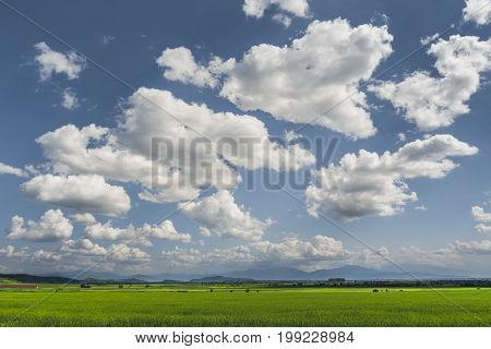 Rural Landscape With Vast Green Wheat Fields