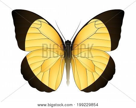 Beautiful butterfly isolated on a white background. Eurema candida butterfly. 3D illustration