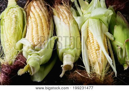Young raw uncooked corn cobs in leaves. Close up over dark brown concrete texture background.