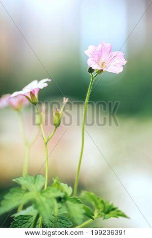 pink vintage soft flowers naturel autumn background