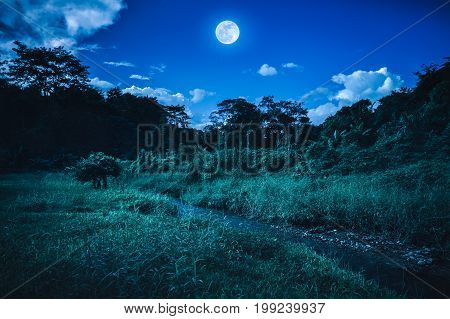 Bright Full Moon Above Wilderness Area In Forest, Serenity Nature Background.