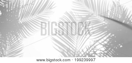 abstract background of shadows palm leaf on a white wall. White and Black
