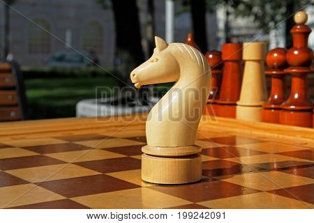 Chess figure of horse on a chessboard