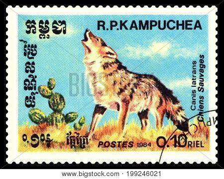 STAVROPOL RUSSIA - August 08 2017 : A Postage Stamp Printed in the Cambodia Shows the dog barking (Canis latrans) circa 1984