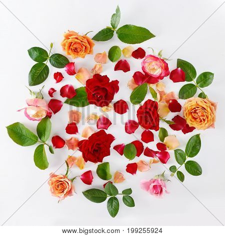 Pink and red roses isolated on white background. Flat lay top view.