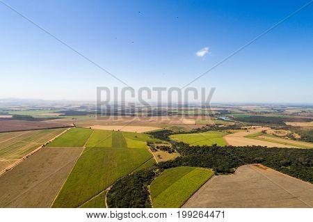 Sugar Cane Field in Brazil