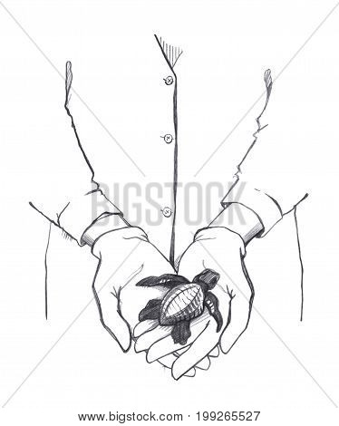 Hands in the gloves of a man in a white coat keep a Newborn sea turtle. Graphic linear tonal drawing by slate pencil. Isolated on white background