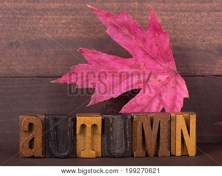 Autumn wood lettering with maple leaf on a wood background