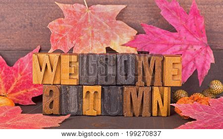 Welcome autumn wood text with autumn leaves on a wood background