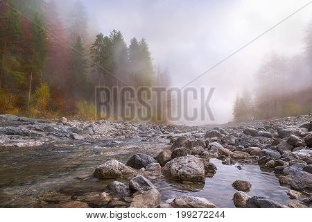 Beautiful fall landscape with a river going through stones surrounded by forests in autumn colors and shrouded by a mystical mist.