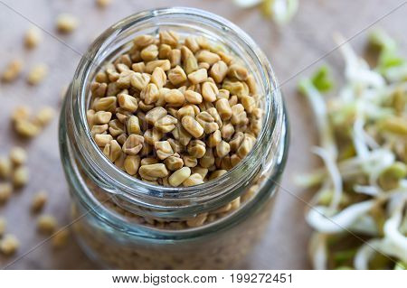 Fenugreek Seeds, With Sprouted Fenugreek In The Background