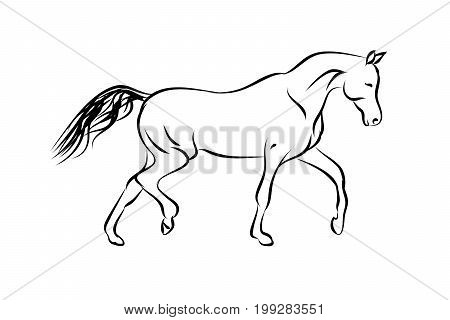 Horse Trotter on white background, vector concept