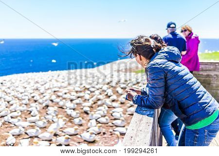 Perce Canada - June 6 2017: People watching Gannet birds colony nesting on cliff on Bonaventure Island in Quebec Canada by Gaspesie Gaspe region