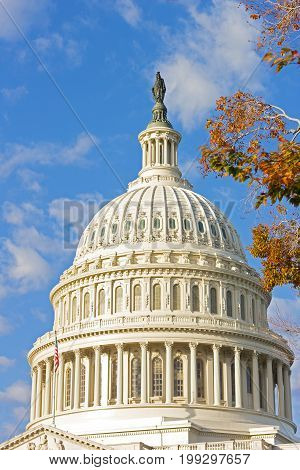 The dome of US Capitol building and colorful autumn tree foliage. Statue of Freedom on top of US Capitol Building in Washington DC USA.