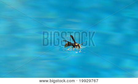 Thirsty wasp