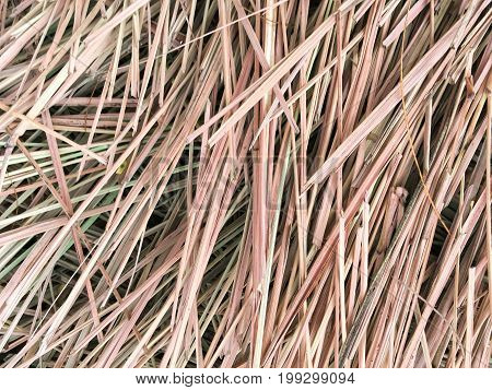 close up dry lemongrass leaves on the ground