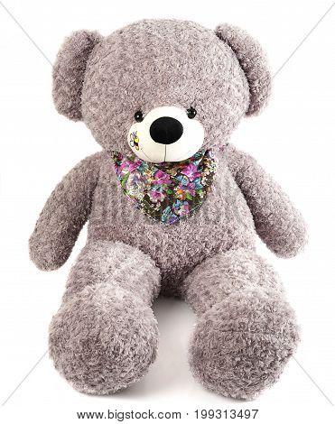 Big grey toy bear isolated on white background