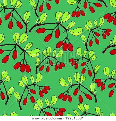 Branch with leaves and ripe barberry berries green background. Seamless berry pattern.Vector hand drawn color illustration.Colored page for adults and children.Designbooktextileprintposterfabric
