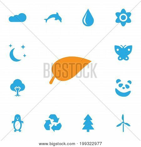 Collection Of Grampu, Midnight, Wind Energy And Other Elements.  Set Of 13 Bio Icons Set.