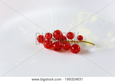 A Sprig with red currant berries lies on a white plate.