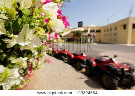 Flowers in the background of parked ATVs. Egypt.