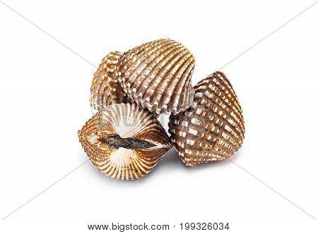 Cardiidae shellfish seafood isolated on white background