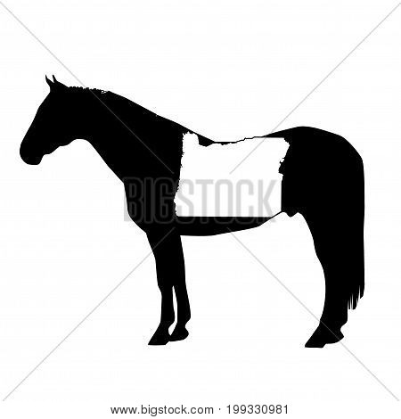 Vector Horse Silhouette With Oregon Boundary Patch Illustration