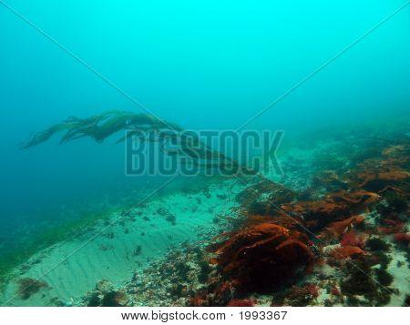 Kelp In The Flow