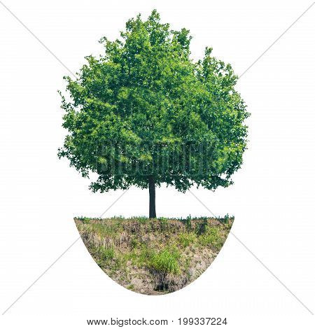 Green tree with piece of ground isolated on white background