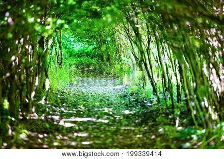 Magical Forest With Path To The Light