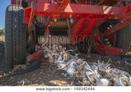 Onion harvester at work. Ground view. Badajoz Guadiana meadows Spain