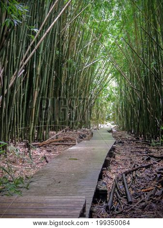 Wooden boardwalk path through dense bamboo forest, leading to famous Waimoku Falls. Popular Pipiwai trail in Haleakala National Park on Maui, Hawaii, USA
