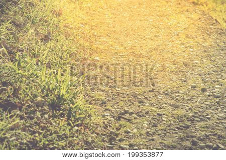 Natural gold walkway with rock and grass selective focus Nature concept