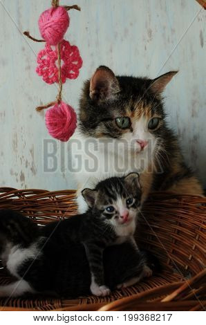 Careful mother for little kittens. A small, fluffy kitten. Lovely creature. Beauty.