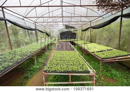 A Garden For Farmer In Northern Part Of Thailand