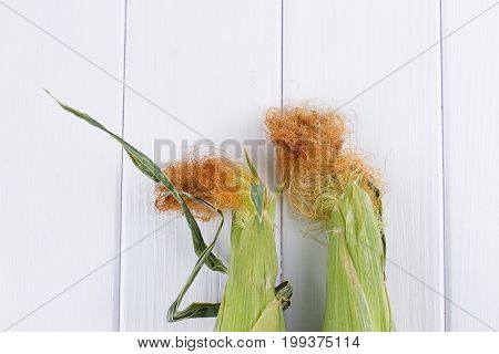 raw Corn on the white wooden background