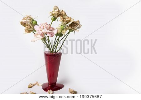 Dry up roses in red vase on the white background