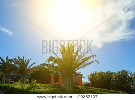 Coast of island of Crete, Greece, with palm trees, beautiful lawns and buildings in the sun and bright sky with clouds