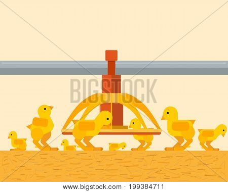 A view from inside on the interior of a poultry farm with chickens. Feeding and growing chicken. Vector illustration