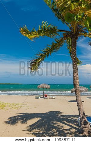 Idyllic sand beach on Caribbean Sea. Palm trees against blue sky. Cuba