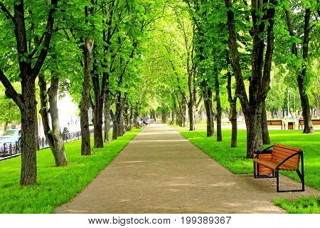 city park with nice promenade path benches and big green trees. City park in the spring