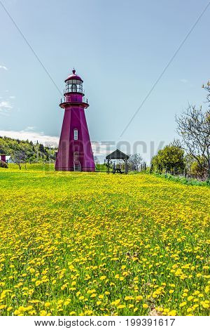 Red Painted Lighthouse With Yellow Dandelion Flowers In La Martre In The Gaspe Peninsula, Quebec, Ca