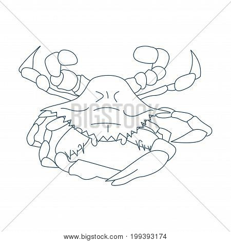 Line Art Styled Vector Illustration: Maryland or Baltimore crab Atlantic Blue crab or the Chesapeake bay blue crab also called Callinectes sapidus.