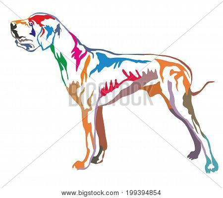 Colorful decorative portrait of standing in profile Great Dane vector isolated illustration on white background