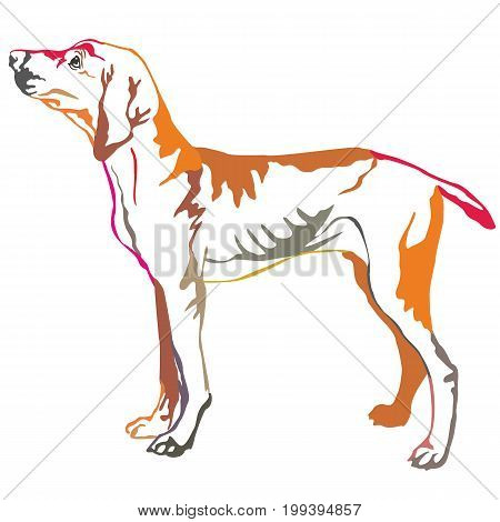 Colorful decorative portrait of standing in profile Hungarian pointer vector isolated illustration on white background