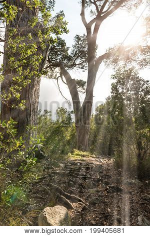 Sunbeams through the foliage at a nice and warm summer day (at Kirstenbosch Capte Town (South Africa))